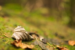 Herbstblatt-2