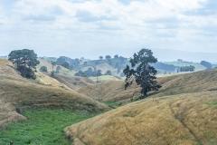 20190204_Neuseeland_Mike_014