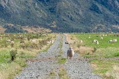 20190222_Neuseeland_2868