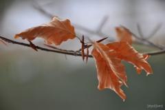 Blätter-1