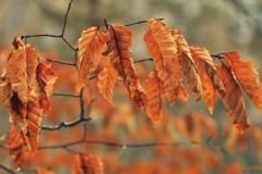 Blätter-2