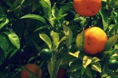 Orangen-2