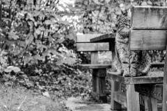 Katze_1