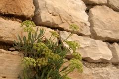 Pflanzengestein